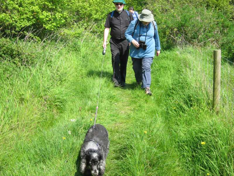Walkers and dog on grassy track.